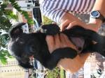 filhote pretinhopeludo1 16abril