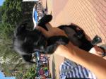 filhote pretinhopeludo2 16abril